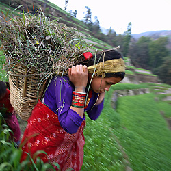 A nine-months pregnant Niruta Bahadur Balami, 14, carries grass to her family's farm for the animals to graze on in Kagati Village, Kathmandu Valley, Nepal on Jan. 30 ,2007. Niruta moved in with the family of Durga Bahadur Balami, 17, and became pregnant when they were only engaged. In some circles of the more socially open Newar people, this is permissible. The harmful traditional practice of early marriage common in Nepal. The Kagati village, a Newar community, is most well known for its propensity towards this practice. Many Hindu families believe blessings will come upon them if marry off their girls before their first menstruation.