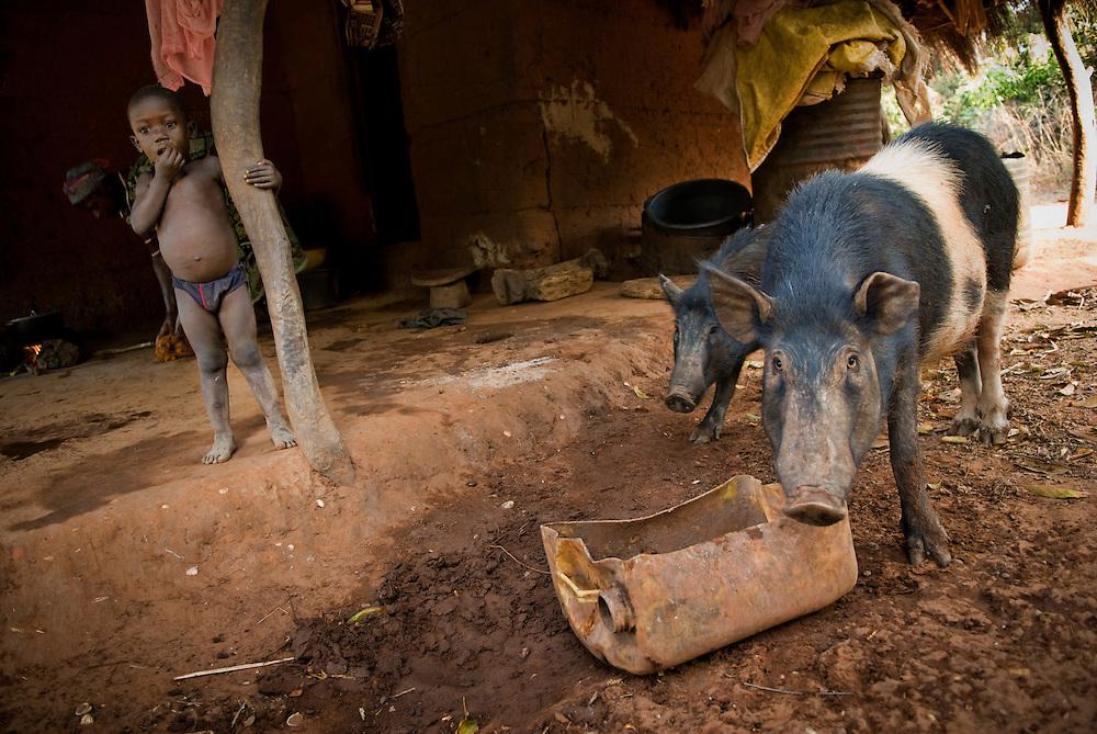Bijagos Islands in Guinea Bissau, pigs in a village.