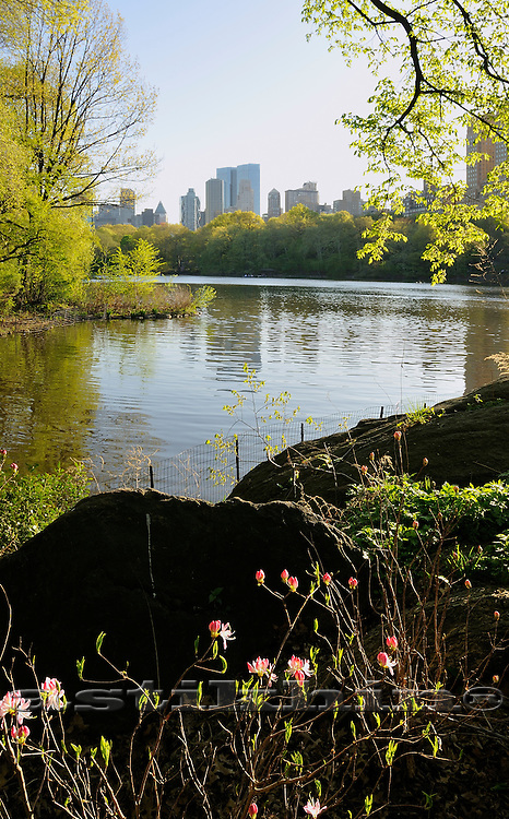 Flowers of Central Park