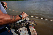 Rebel sets a line for alligator hunting near Shell Island, Louisiana while a recently shot gator bleeds over the edge of the boat on Saturday, September 19, 2009.