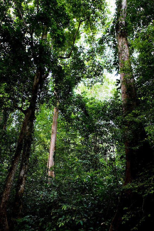 Rainforest in Manokwari city park, Papua, Indonesia, Sept. 10, 2008..Daniel Beltra/Greenpeace