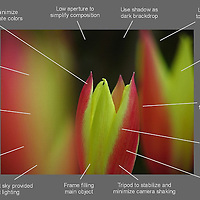 How to take better flower photography images - a free photo tip cheat sheet ready for download.