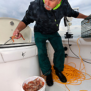 WA11838-00...WASHINGTON - Phil Russel counts shrimp as he places them in a live well while shrimping on the Puget Sound.  (MR# R8)