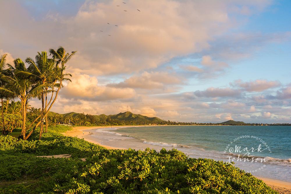 Frigate (Iwa) birds flying over Kailua Beach, Oahu, Hawaii