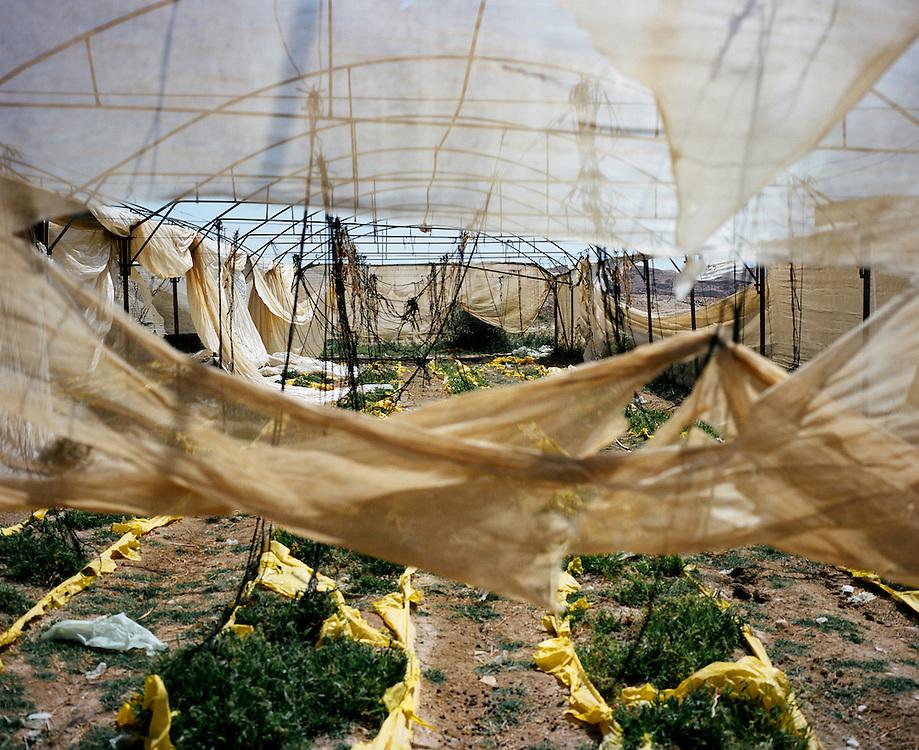 L'une des nombreuses serres abandonnées à cause du manque d'eau à Auja. La source d'Auja a été dramatiquement asséchée, conséquence de l'implantation des puits de Mekorot, la compagnie israélienne des eaux, et plus récemment, du changement climatique. Les cultures des fermiers palestiniens sont dévastées et les terres abandonnées. Auja, Territoires Palestiniens Occupés / West Bank, mai 2011