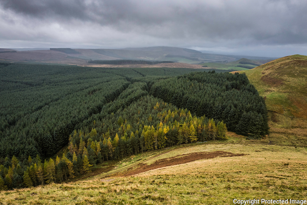 Camptown, Jedburgh, Scottish Borders, UK. 27th October 2016.  Looking south weat from Phillip Law (422m) at autumn colours on the outskirts of Leithope Forest. The Carter Bar border crossing on the Anglo Scot Border is on the skyline. The area is famous for the Raid of Redeswire, a skirmish between the English and Scots in 1575.