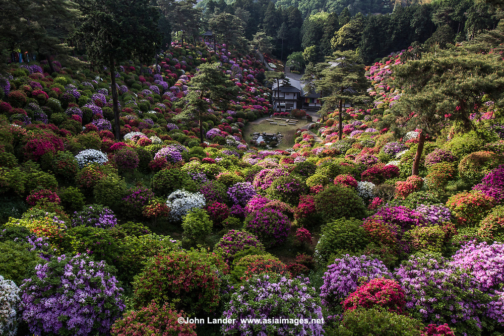 Shiofune Kannon-ji Azalea Garden - Shiofune Kannon-ji is most famous for its azaleas that bloom in late April and early May, with 17,000 trees from fifteen different types.  The plants form a unique azalea garden that is unusual in its design and conception.  On top of the undulating hills and mounds of azaleas is a large statue of Kannon the Buddhist goddess of mercy for whom the temple is named. <br />  Shiofune Kannonji temple is where founder Yao Bikuni is said to have lived 800 years through eating mermaid flesh. The temple was built in 650, though the main hall was erected in the Muromachi period.  The temple has been designated as an important cultural property by the government of Japan.