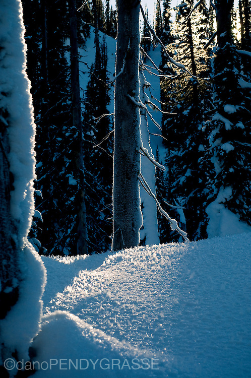 Late afternoon light filters through the branches and lights up the hoar frost in the Kootenay Mountains of British Columbia.