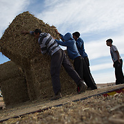 Bedouin kids help to unload hay usad as food for the animals in the village of Aricha next to Mitspe Ramon. Photo by Oren Nahshon