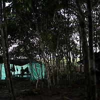 FARC COLOMBIA 2016