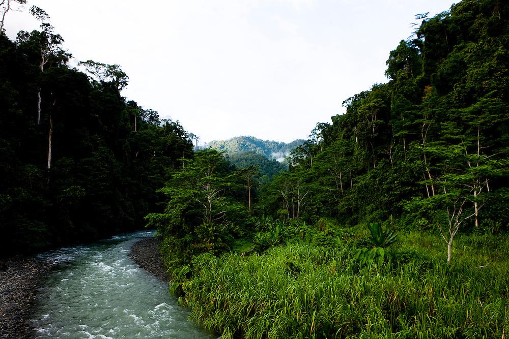 The Waramui River in the Kebar Mountains in the Manokwar region, Papua, Indonesia, Sept. 12, 2008..Daniel Beltra/Greenpeace