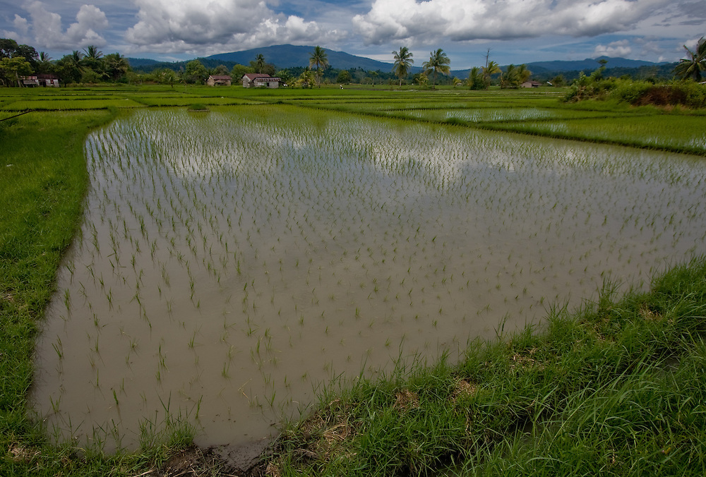 Rice paddies and houses in Central Sulawesi