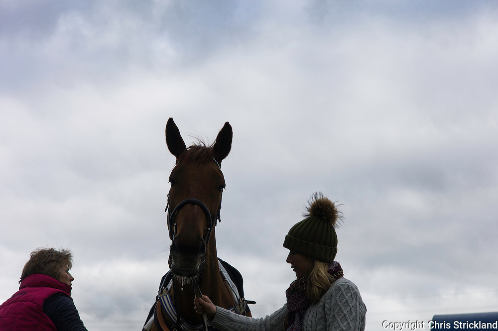 Corbridge, Northumberland, England, UK. 28th February 2016. Trainer Di Walton grooms racehorse Durban Gold prior to racing at the Tynedale Hunt annual Point to Point horse racing fixture.