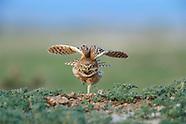 Creatures of Flight