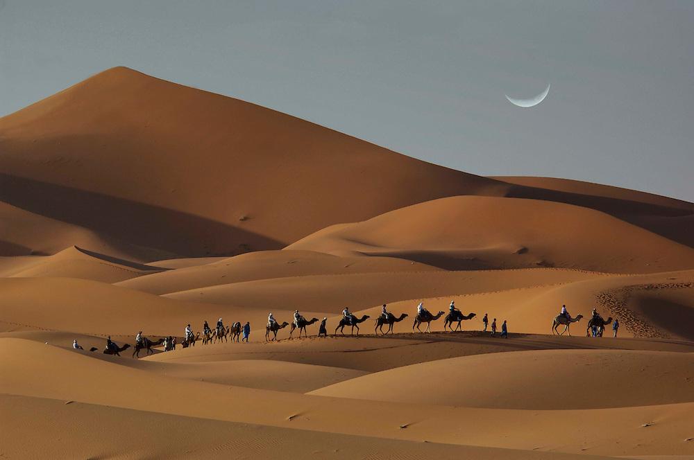 Camel caravan, Sand Dunes, Erg Chebbi,  Merzouga, Morocco