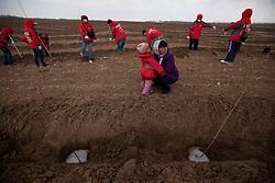 Local farmer Chen Guo fen holds her daughter as they look around at their field where volunteers from Shanghai Roots & Shoots are helping to plant tree saplings in Kunlun Qi in the Inner Mongolia Autonomous Region of China on 23 April 2011. Volunteers from Shanghai Roots & Shoots help local farmers plant trees on plots of land allocated by the government where the farmers are licensed to harvest the trees that have reached maturity, but only on the condition that they replant on the same plot. Inner Mongolia, China's third largest province, is fighting severe desertification, much like the provinces of Xinjiang, Gansu, Qinghai, Ningxia, Shaanxi, Heilongjiang and Hebei. Over-grazing, logging, expanding farms and population pressure, along with droughts have steadily turned once fertile grasslands into sandy plains. China has adopted measures to stop the land degradation such as reforestation, resettling nomadic Mongolians from grasslands to urban areas and restricting grazing areas. Tree planting has become a key government effort to combat desertification and supporting the government's reforestation endeavors are numerous non-governmental organizations (NGOs), such as Shanghai Roots & Shoots. The NGO launched the Million Tree Project in 2007 in Kulun Qi with aims to plant its first million trees by 2014 to hinder the expanding desert. To-date, they have planted more than 600,000 trees.