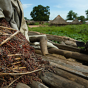 Elevated grain stores such as this one, seen in Kudo village in Eastern Equatoria on 8 August 2014, shoud ordinarily be full of sorghum following the harvest. This year, however, due to a combination of drought in some parts of the country, the ravages of pests in others, and instability caused by war, many South Sudanese are facing acute food shortages and possibly famine. Lena Kamilo, who has two sons and is the owner of this grain, was displaced by fighting. Her January harvest was then destroyed by pests—she recouped only three bundles of sorghum, two of which have already eaten. She says that she is trying to eke out the remainder until January 2015, feeding her family only pumpkin leaves and the leaves of black eyed peas, both common foods that people fall back on in hard times. She has received seed to plant from Plan International to improve her chances of producing a viable harvest during the next growing season.