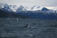05: WINTER TOUR ORCAS