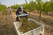 Year in the Vineyard & winemaking purchased 2014+2015
