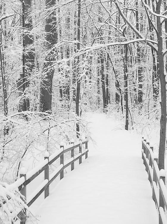 Snow Covered Bridge, Lower Huron Metro Park