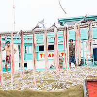 unloading and tallying fish, duong dong