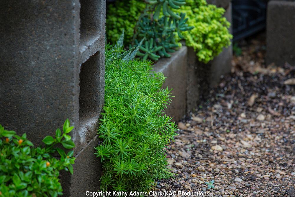 Garden, cinder block planter, Houston, late summer, Texas.