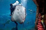 April 2009 Ushaka Marine World Durban, KwaZulu Natal, South Africa. Extras: Jessica Jayde Jamison (t-shirt with print and black shorts); Amanda Ngame (brown Striped dress); Thembelihle Mazibuko (yellow t-shirt and shorts)