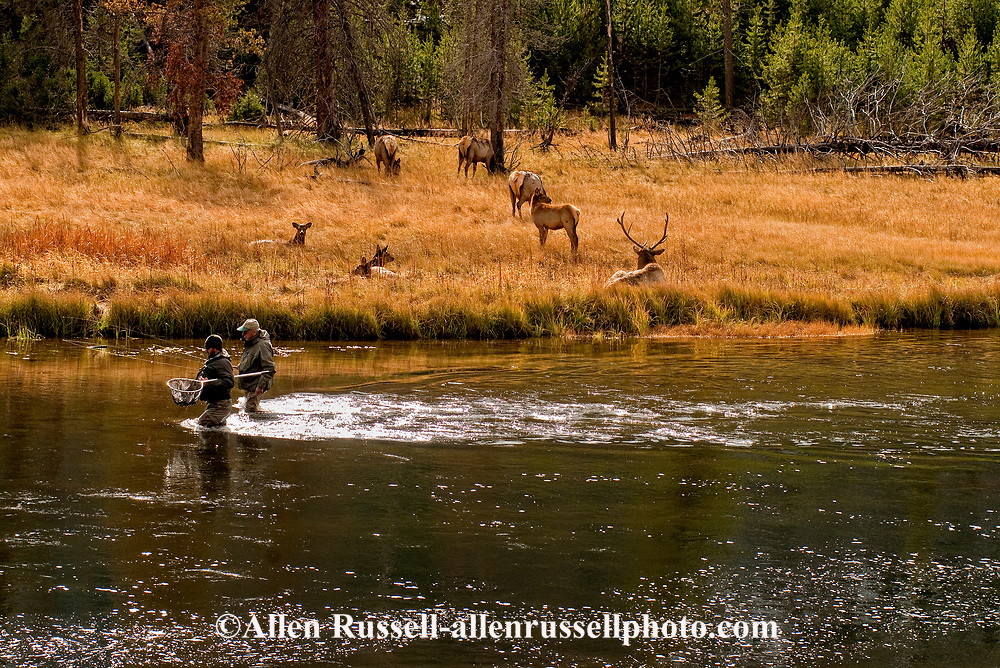 Fly fishing yellowstone images reverse search for Yellowstone national park fishing
