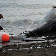 Whale hunt. Chukotka, Russia, 2015