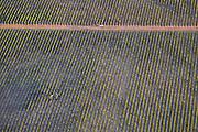 Harvest @Martine Perret - Margaret River aerial shot. 27 February 2014