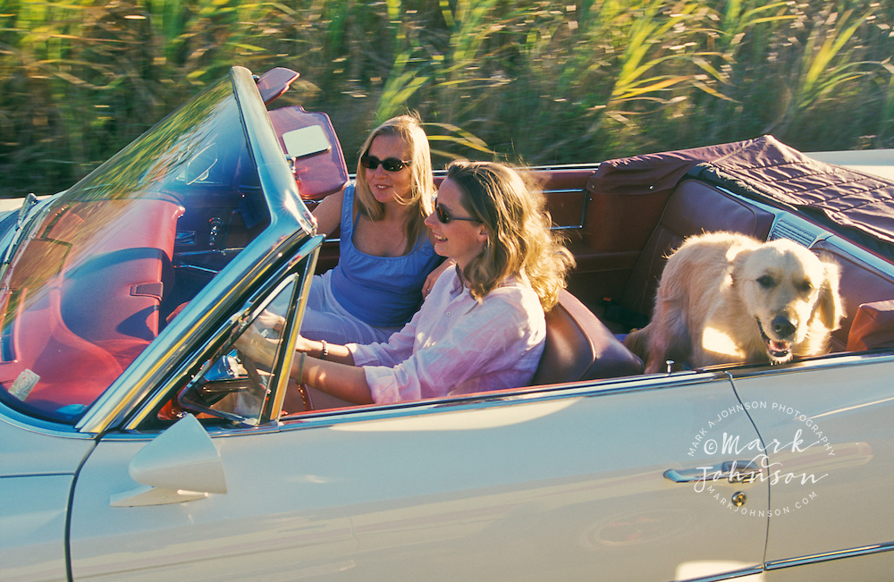 2 women friends riding in convertible Cadillac with their dog