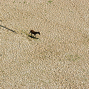 27/10/05 Curuai lake, Para (Brazil). The Curuai lake is almost completely dry during one of the worst droughts ever recorded in the Amazon region..©Daniel Beltra