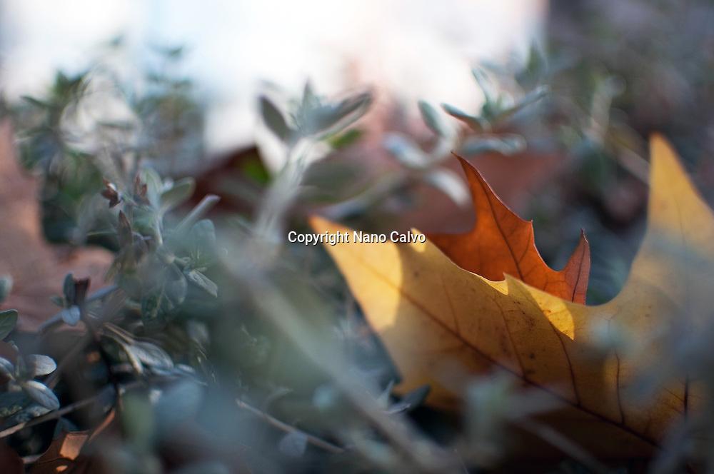 Dry fallen leaves in Autumn