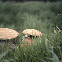 Two rice farmers' (head-and shoulders) wearing conical reed hats. Faces, bodies hidden.