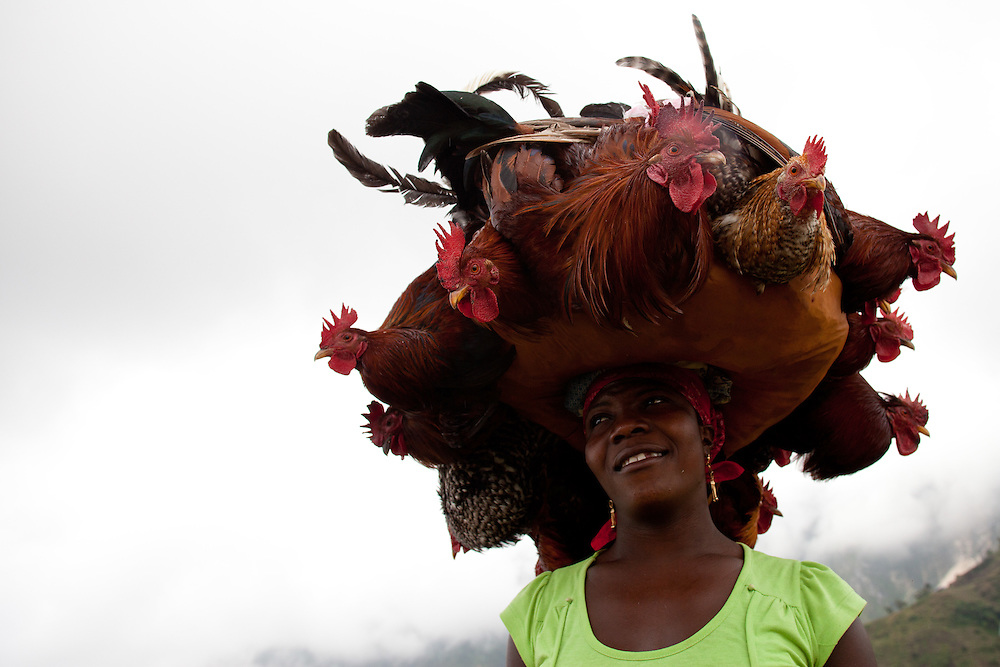A woman carries roosters to the market to sell on road between Furcy and Seguin.