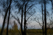 Heart-shaped moon through the trees at dusk, along the Dungeness River, in this impressionistic scene.