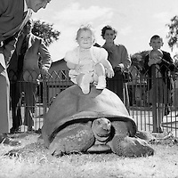Zoo - Animals and Visitors at Dublin Zoo.15/07/1953
