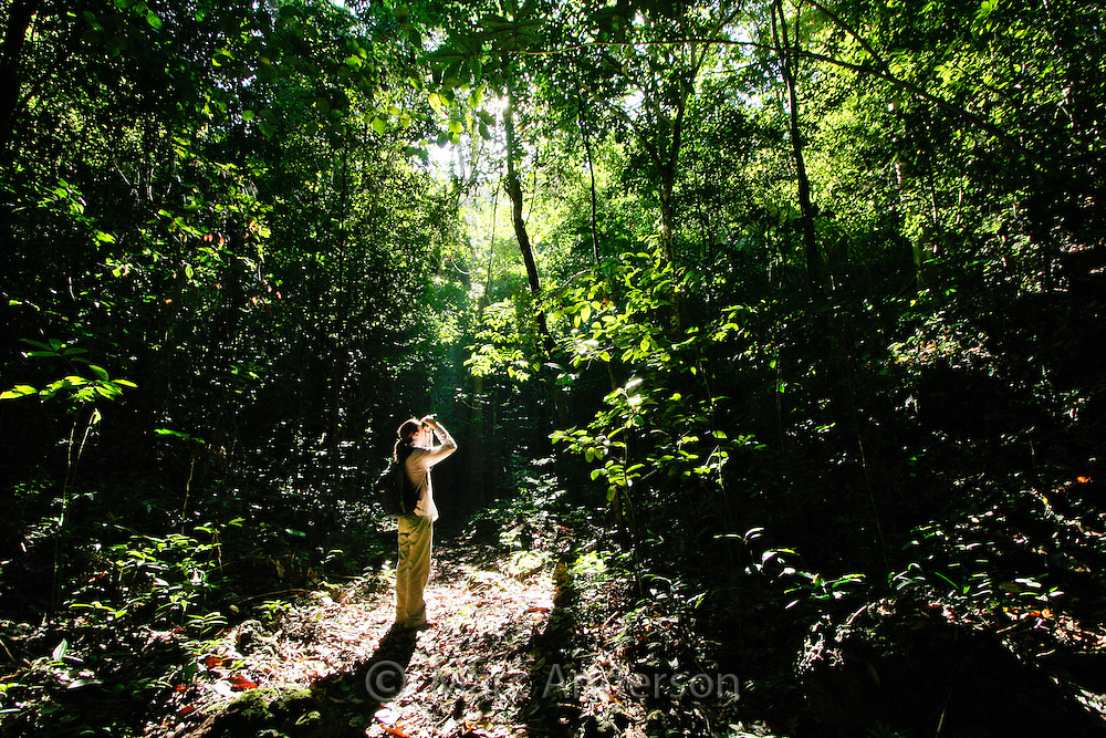 A woman standing in a rainforest and looking through binoculars, Rajah Sikatuna National Park, Bohol, Philippines.