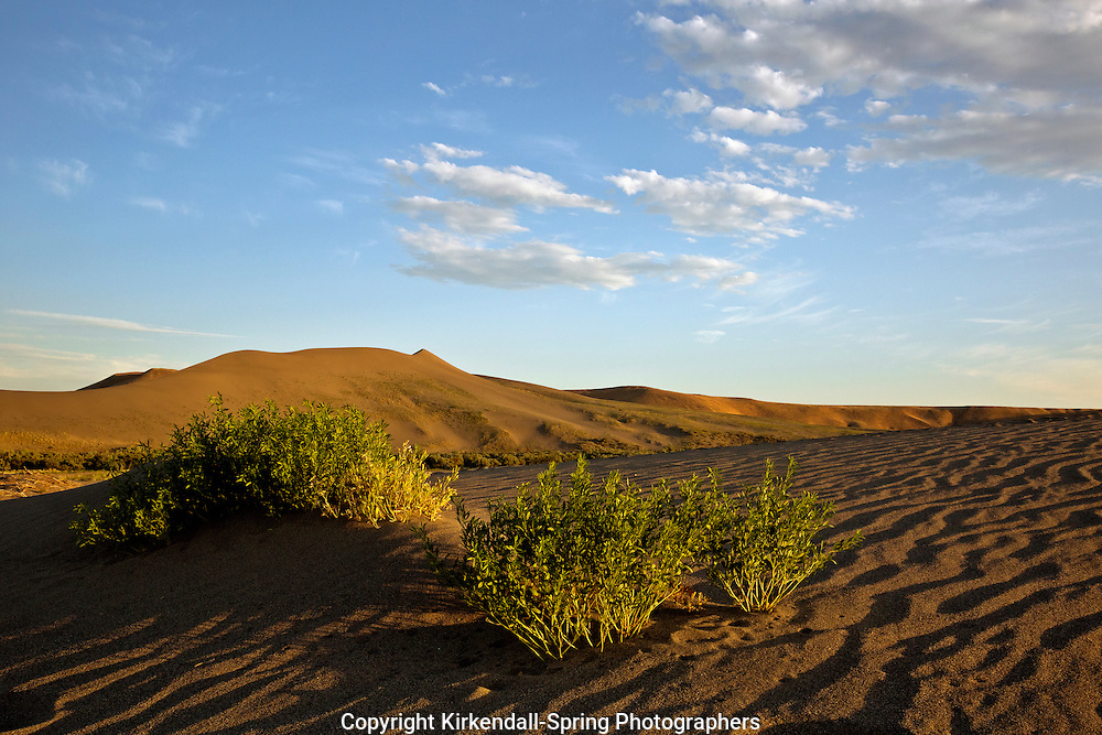 ID00644-00...IDAHO - Patterns and bushes in the sand dunes at the Bruneau Dunes State Park.
