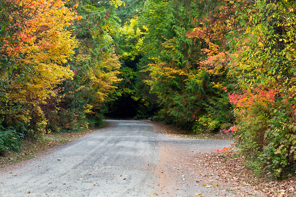 Fall colours along a gravel road in Silver Lake Provincial Park near Hope, British Columbia, Canada