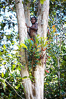 West Papua is home to over 300 tribes. They have inhabited the island for more than 40,000 years. Many of the last remaining tribal cultures on our planet can be found in West Papua. An astounding 15% of the world's languages are spoken there, by just 0.01% of the global population.