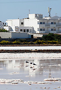 Birds resting in Las Salinas, the salt pool in Formentera