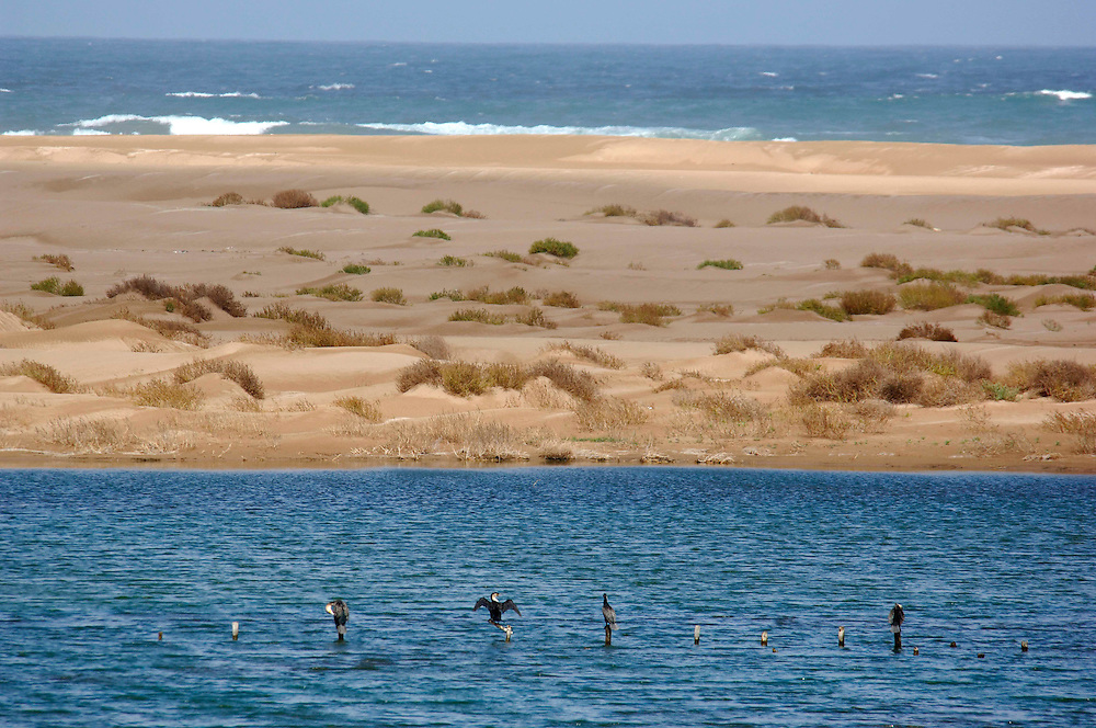 Parc National de Souss-Massa, near Sidi Wassay, Morocco