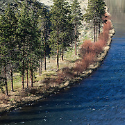 The late afternoon sun causes the ponderosa pine trees to cast long shadows over the Yakima River near Yakima, Washington.