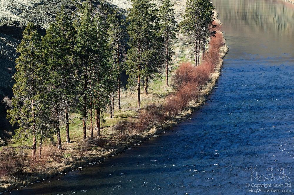The late afternoon sun causes the ponderosa pine trees to cast long shadows over the Yakima River near Yakima, Washington.