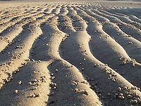 Small sand balls on the beach