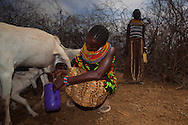 """Christine Lobar, one of the founders of the mother-to-mother support group in their village of Manyatta Zebra milks one of her goats during a the mother to mother group in Isiolo county, Kenya Thursday, Feb. 13, 2014. Community health worker Eunice Nalokita and Christine Lobar founded a mother-to-mother support group in their village of Manyatta Zebra. They teach women about hygiene and sanitation, nutrition, how to breastfeed, the importance of going to antenatal check-ups and delivering in hospital. They are referred to within the village as """"doctors"""". The group has transformed the health of women and children. For example, there are very few cases of diarrhea as women know how to treat water and have much better levels of hygiene in the home. As part of the mother to mother group the women in the village were given chicks to rear and were shown how to grow their own vegetables, using the money from selling their crop to buy more seeds."""
