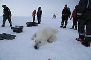 06: ICEBREAKER POLAR BEAR SCIENCE