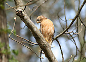 Birds of Prey and Carrion Birds