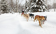 Musher James Wheeler competing in the Fur Rendezvous World Sled Dog Championships at Campbell Airstrip in Anchorage in Southcentral Alaska. Winter. Afternoon.